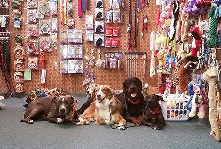 dog beds Columbia, SC