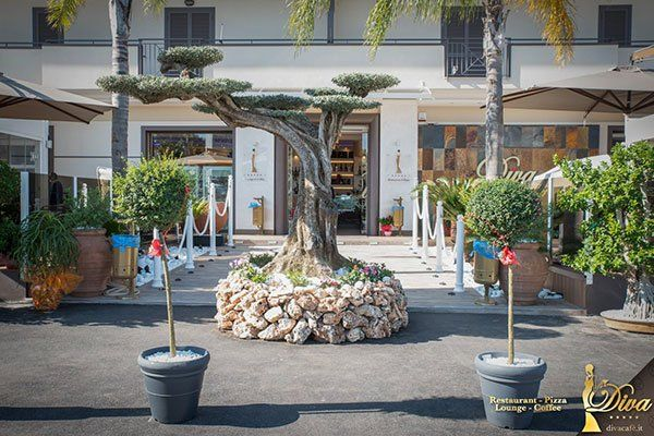 un albero bonsai davanti un ristorante