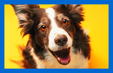 If you need someone to look after your pets in Stockport call 0161 430 3616