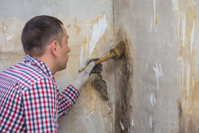 The Common Signs That You May Need to Hire a Mold