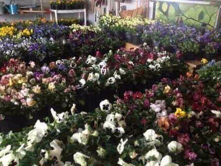 Floral Garden Center U2014 Landscaping In Virginia Beach, VA