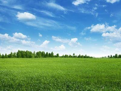 vista di un campo verde