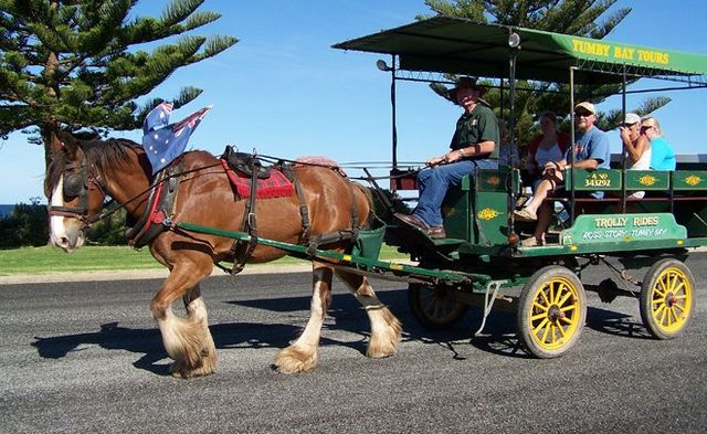 Ross Story clydesdale horse and trolley ride