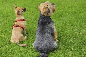 Dog ObedIence TraInIng (a mInImum of 5 sessIons)
