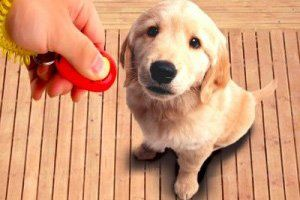 Puppy TraInIng Package (a mInImum of 3 sessIons)