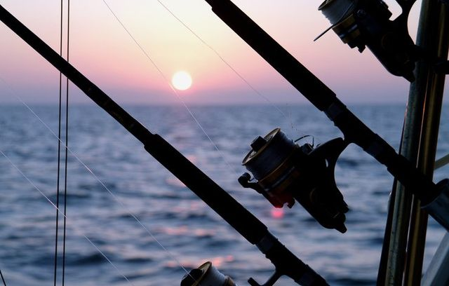 BEST BAIT FOR LOCAL FISHING IN SOUTHWEST FLORIDA