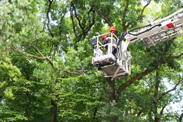 Trimming and tree maintenance in Milford, OH