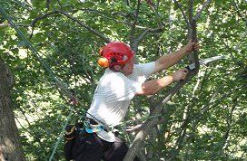 Man providing tree services in Milford, OH
