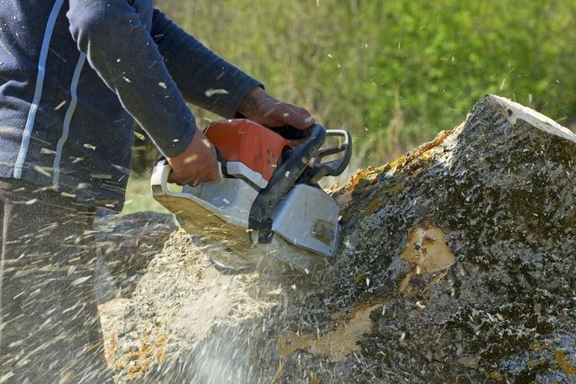 Image result for Stump Grinding Services istock