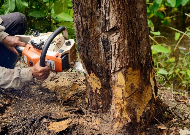 Image result for Stump Grinding Contractor istock