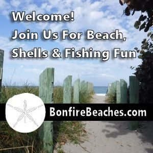 Beaches Shells Fishing and Fun
