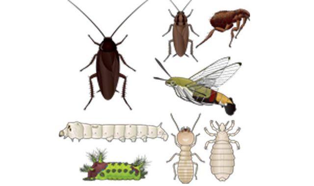 set di simboli insetto