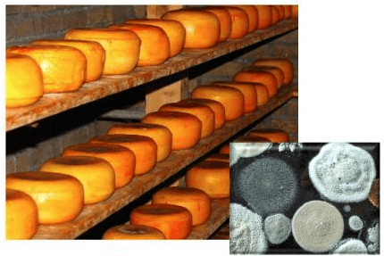 Food Quality Control & Investigation in Little Rock, AR