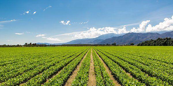 Un campo agricolo e vista del cielo azzuro