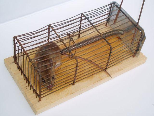 Rodent Control Morgan Hill CA