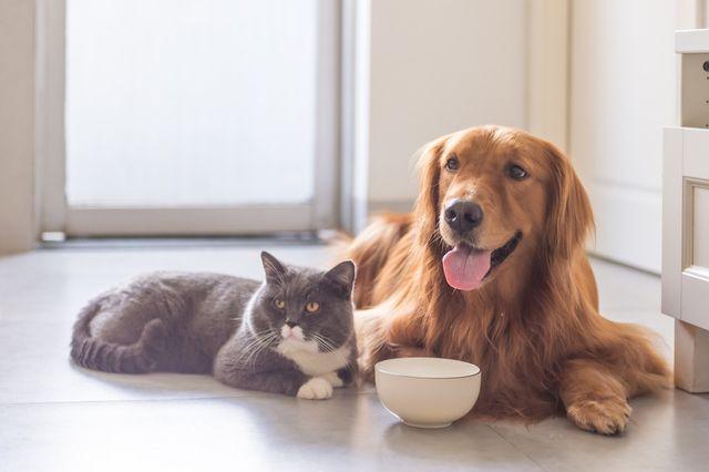 Veterinary Surgeries Newbury Park Ca Borchard