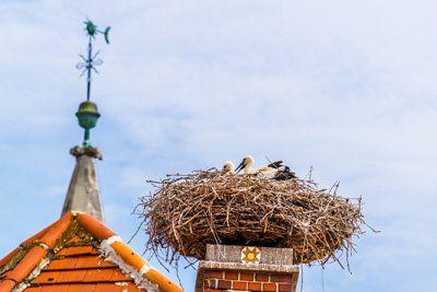 nido di uccelli su un camino