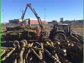 Tree mulching