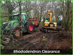 vegetation clearance