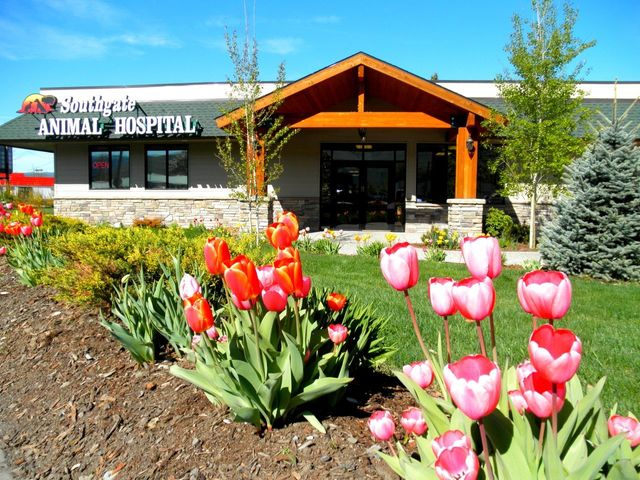 Southgate Animal Hospital in Missoula, MT will answer your questions