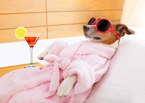 cane di piccola taglia con accappatoio, occhiali da sole e cocktail
