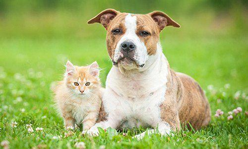 cane e gatto accovacciati vicini - L'Arca di Noé - Monteroni d'Arbia, SI