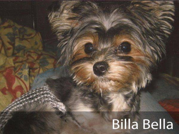 Billa Bella