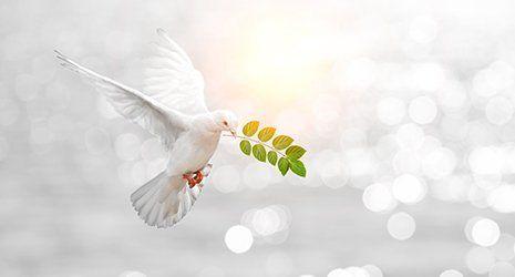 colomba bianca con  ramo di ulivo