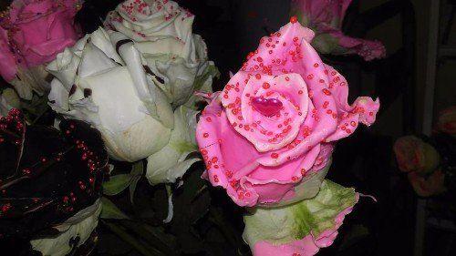 delle rose rosa e bianche