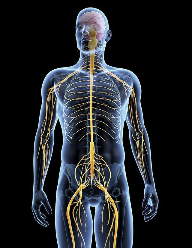 Musculoskeletal system in Palmerston North