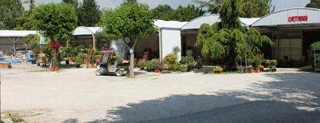 fiori e piante da Conti Francesco Vivai e Piante a Ostra Vetere