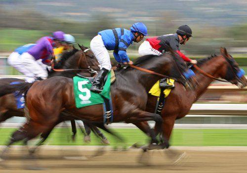 scommesse corse cavalli