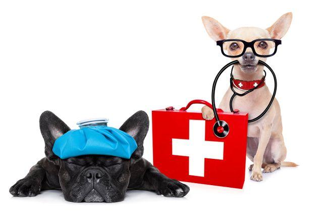 Sick Pet, Pet Care, Pet Surgery, Dofg Surgery, Cat Surgery