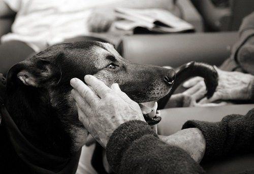 una mano di un signore anziano che accarezza un cane