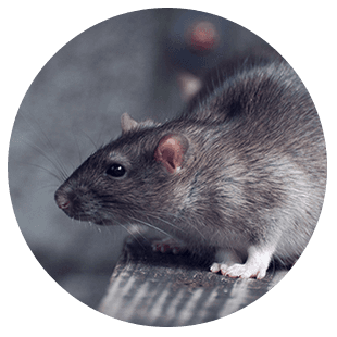 Pest eradication and control