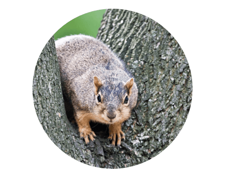commercial pest control solutions
