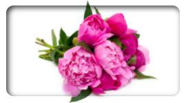 bouquet di fiori recisi, composizioni con fiori freschi, mazzo di fiori freschi