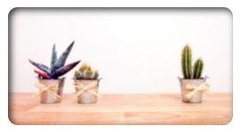 piante grasse, piante ornamentali, piante sempre verdi