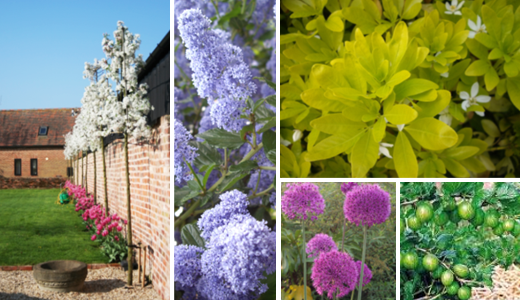 plants - Evesham - Castle Acre - nursery montage