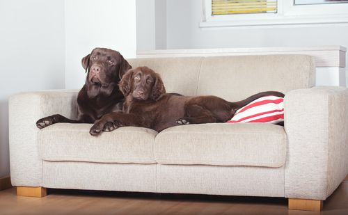 Professional needed for couch cleaning for pet odor and fur in Sheridan, CO