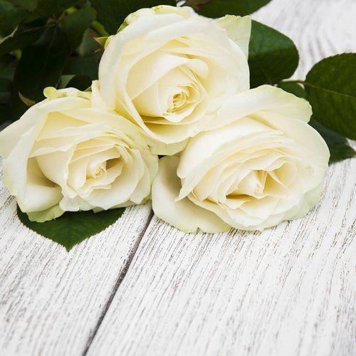 tre rose bianche