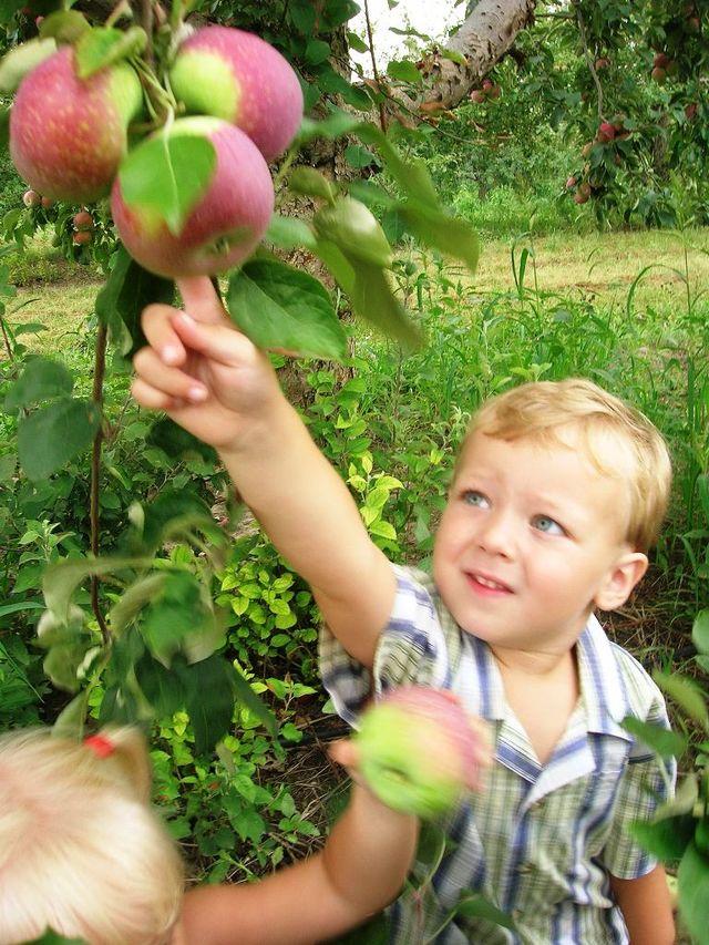 Apple picking at the Elegant Farmer