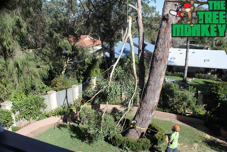 Our tree felling services on the Central Coast