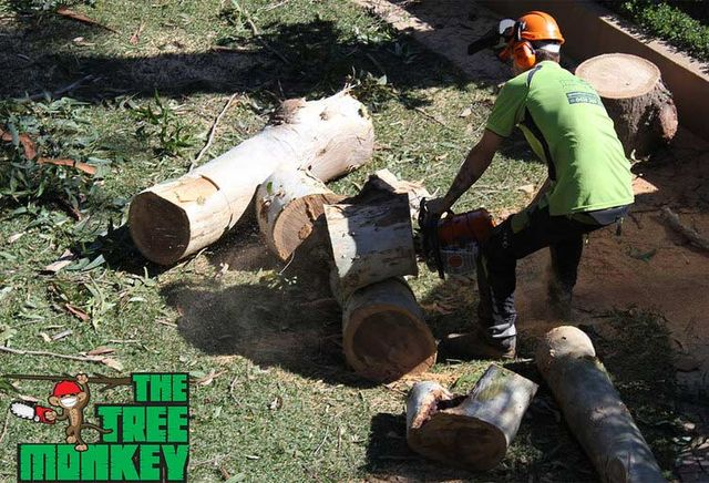 One of our tree services experts on the Central Coast