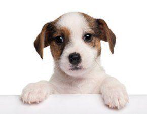Dog wash - Truro, Cornwall - The Dog House - Dog