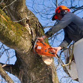 Tree maintenance and pruning