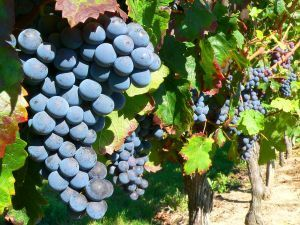 Temecula wine tour limo service in San diego