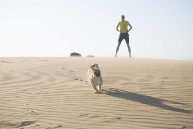 Dion Leonard, Finding Gobi, Gobi the Dog, Ultramarathon Dog, China, Gobi Desert