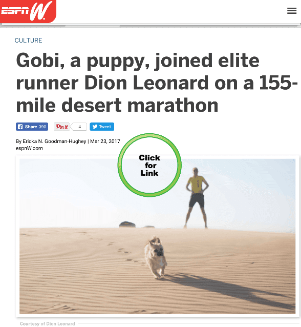 Gobi, Puppy, National Puppy Day, Finding Gobi, Dion Leonard, Gobi the dog, 155 mile, Ultra, Ultra marathon, Gobi Desert, Gobi March, marathon, china desert