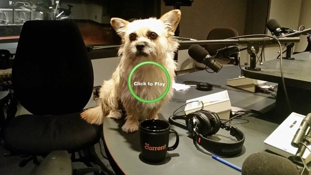 Dion Leonard, Gobi the Dog, Finding Gobi, The Current, CBC Radio,Anna Maria Tremonti